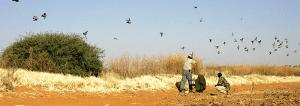 due-jagt