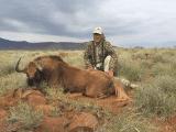Non-trophy wildebeest